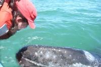 Looking into the eye of a friendly grey whale in San Ignacio Laguna, Baja, Mexico - Pure Magic!